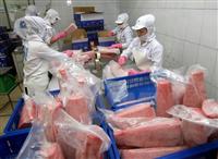 Proccessing exported tuna (Illustrative photo: VNA)