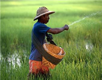 Myanmar earns more than 1.11 billion USD from rice exports