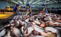 Hầu hết các doanh nghiệp Việt Nam hiện nay chưa đủ khả năng kiểm soát đồng bộ quá trình sản xuất nguyên liệu.