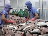 Processing Tra fish for export (Source: VNA)